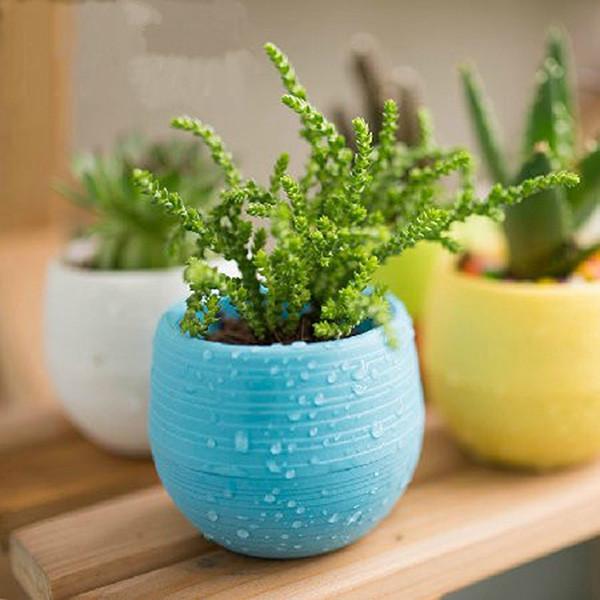 ClicknOrder & Plastic Flower Pot Succulent Plant Flowerpot For Home Office Decoration 5 Color