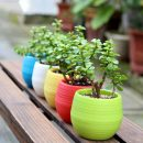 Plastic Flower Pot Succulent Plant Flowerpot For Home Office Decoration 5 Color