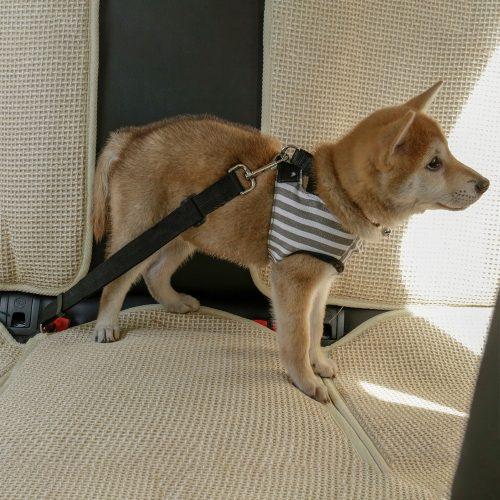 Dog Car Travel Seat Belt Clip Lead