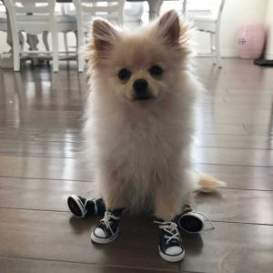 Pet Dog Anti-slip Waterproof shoes
